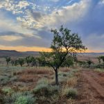 1 SOSTENIBILIDAD 201203_Trabajos ambientales (27)